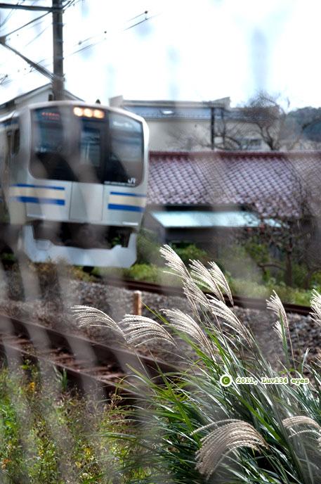 ススキ 北鎌倉 2011/11/08