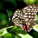 侵略的外来種に対する規制