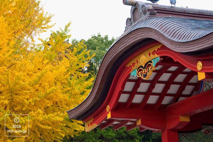 鶴岡八幡宮 イチョウの黄葉 2010/11/26