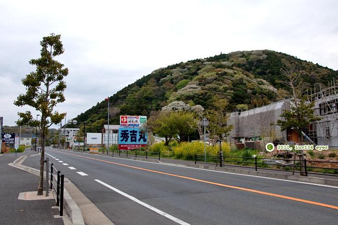 ヤマザクラか 逗葉新道・阿部倉山 2011/04/18