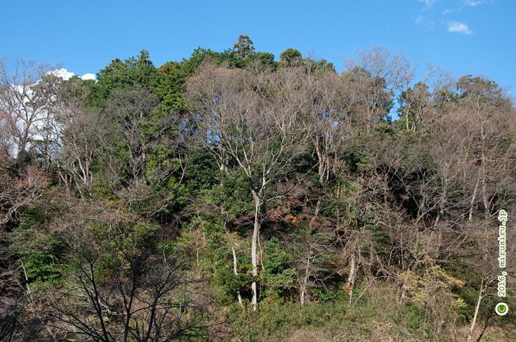 冬枯れの木々 鎌倉中央公園 2016/12/23