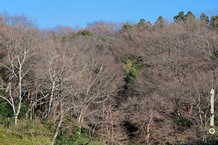 鎌倉中央公園 2016/12/23