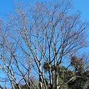 冬枯れの木々 茅ケ崎里山公園 2017/01/01