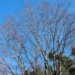 冬枯れの樹形
