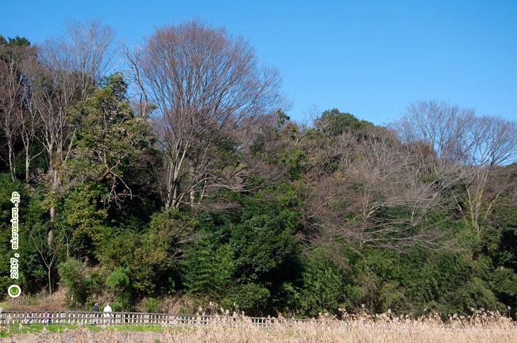茅ケ崎里山公園 2017/01/01