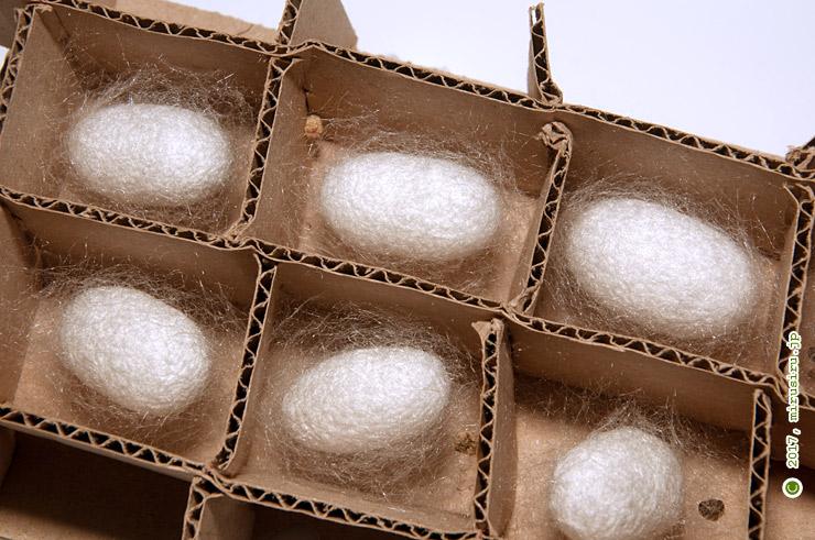 手作りの段ボール製まぶしに作られたカイコの繭 2017/08/09