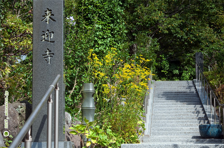 オミナエシ 鎌倉市西御門・来迎寺 2017/08/19