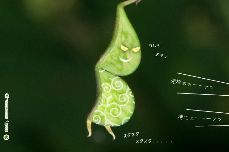 ヌスビトハギの若い実を盗人っぽくしてみた 鎌倉中央公園 2017/09/19