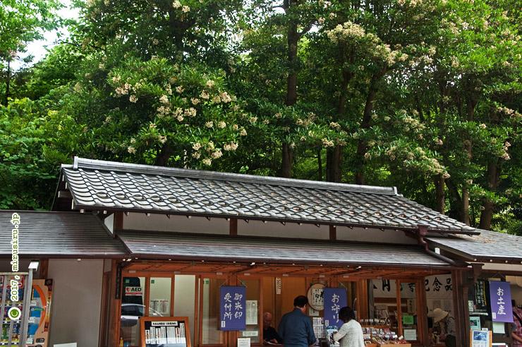 サンゴジュ 鎌倉市・円覚寺 2017/06/14