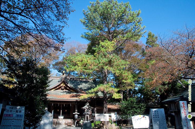 幸せの松 平塚市・前鳥神社 2017/11/25