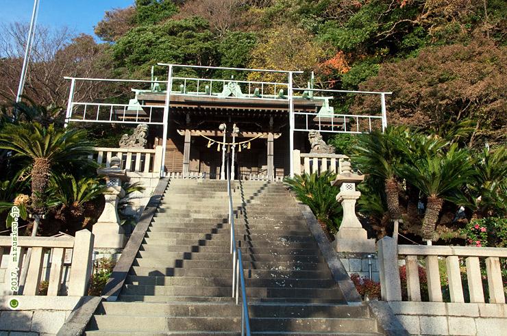 ソテツ 横須賀市・東叶神社 2017/12/05