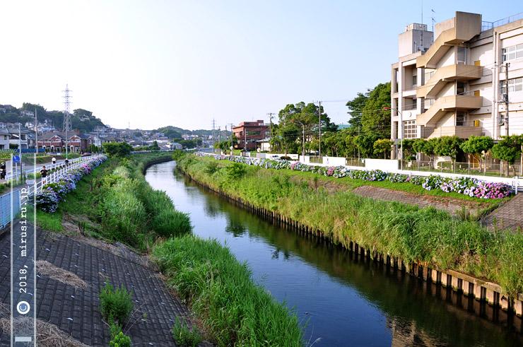 境川アジサイロード 藤沢市・大清水 2010/06/24