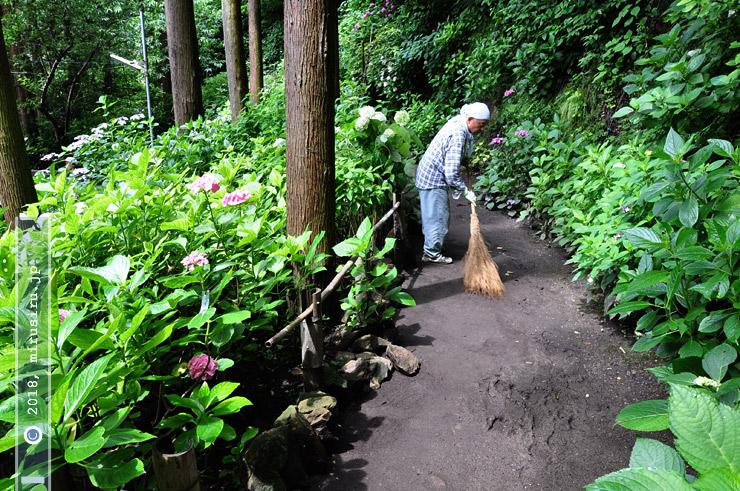 紫陽花小道 鎌倉市坂ノ下・御霊神社(権五郎神社) 2010/06/24