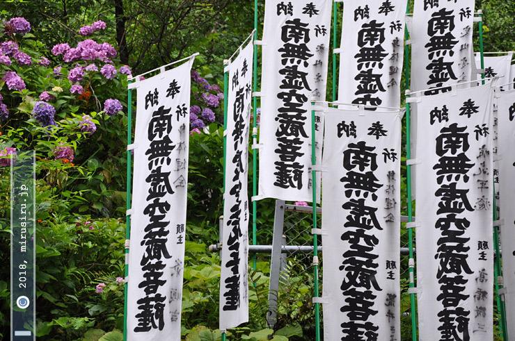 アジサイ 鎌倉市・成就院虚空蔵堂 2010/06/28