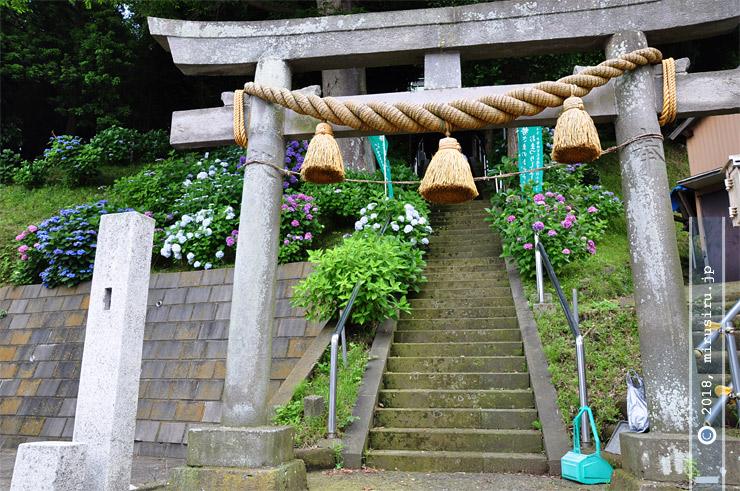 アジサイ 鎌倉市常盤・八雲神社 2010/07/01