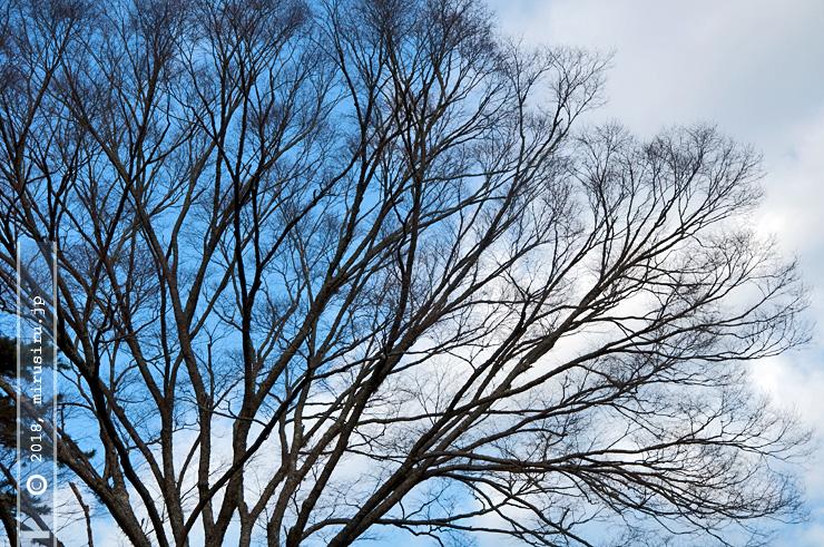 静岡県・熱海梅園 2017/01/29