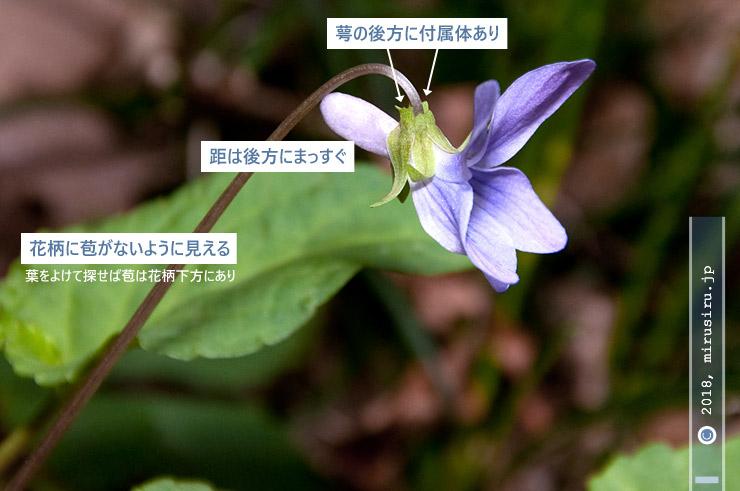 コスミレの特徴 横須賀市・砲台山周辺 2017/02/27