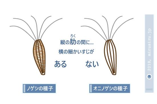ノゲシとオニノゲシの種子の違い