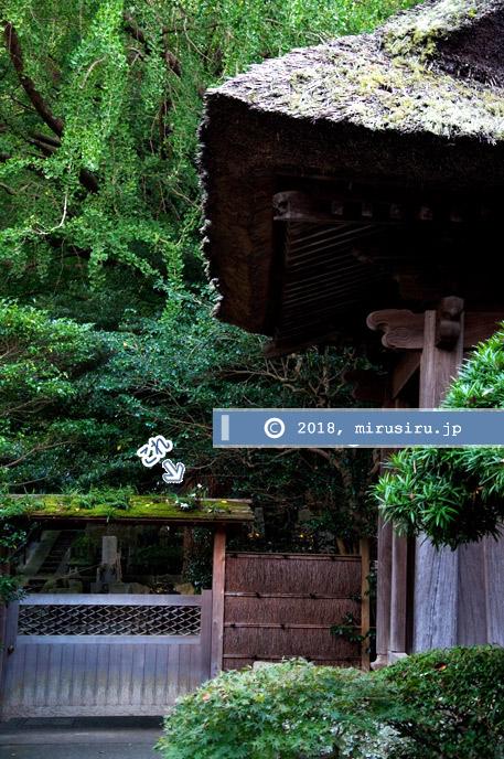 セッコク 鎌倉市・報国寺 2012/10/06