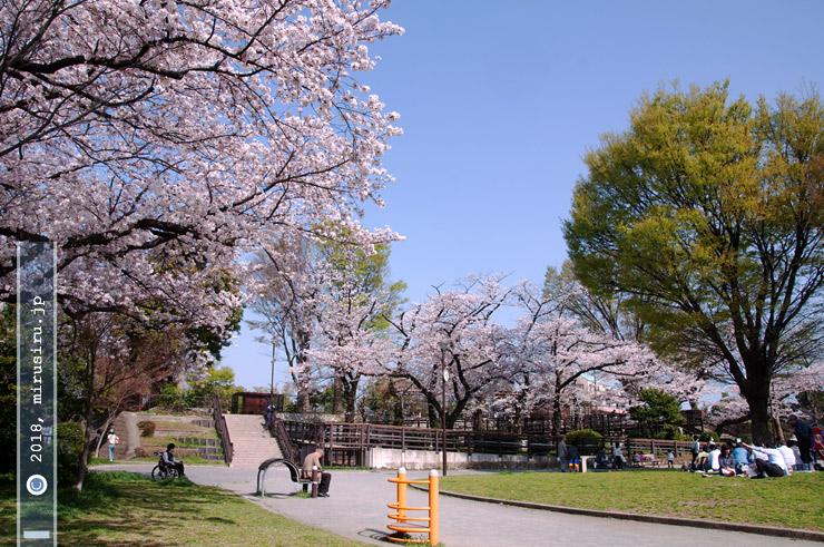 ソメイヨシノ 横浜市西区・野毛山公園 2018/03/29