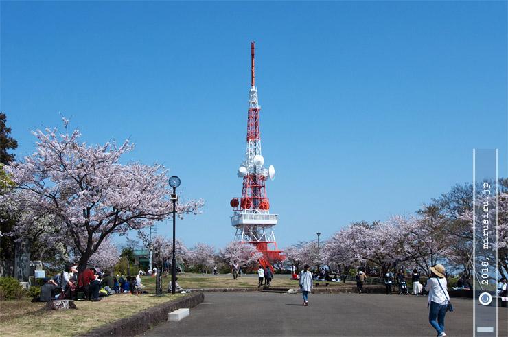 ソメイヨシノ(とオオシマザクラ) 平塚市・湘南平 2018/03/31