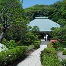 ウメなどの新緑 鎌倉市・浄妙寺 2018/04/22