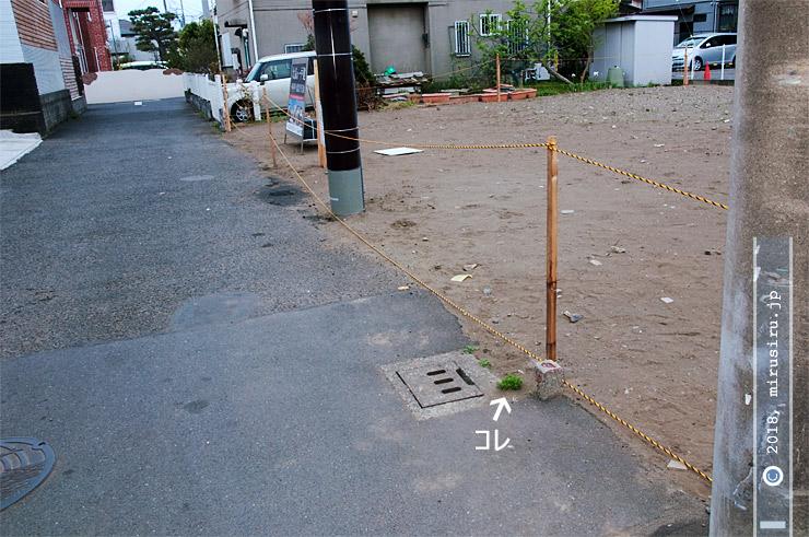 ムシクサの大きく成長した株 茅ヶ崎市東海岸南 2018/04/14