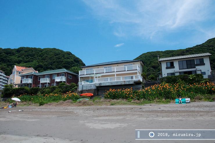 カンナ 横須賀市・秋谷海岸 2017/07/07