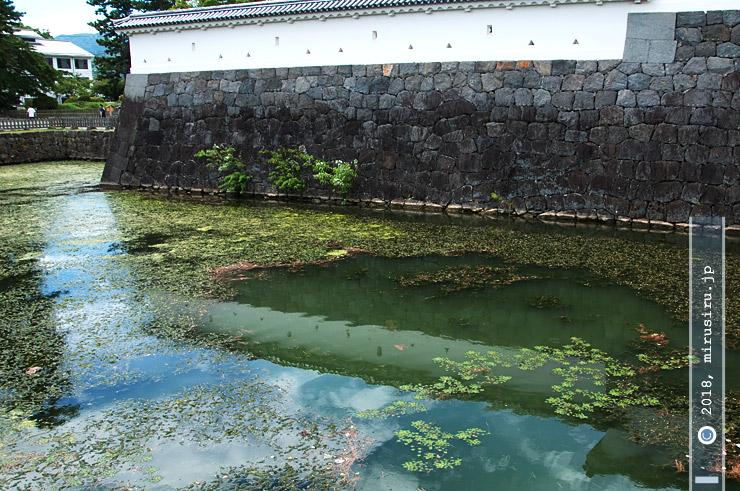 オオカナダモの大量繁殖で汚れた堀、右下の緑色はヒシ 小田原城址公園 2016/08/08