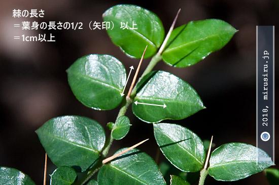 葉山町・逗子市・三浦アルプス 2018/11/23