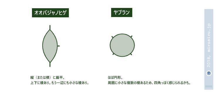オオバジャノヒゲとヤブランの果柄断面の模式図