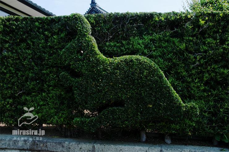 イヌツゲ(左右はラカンマキ)の生垣を刈った、ウサギのトピアリー 鎌倉市・円覚寺白雲庵 2019/06/06
