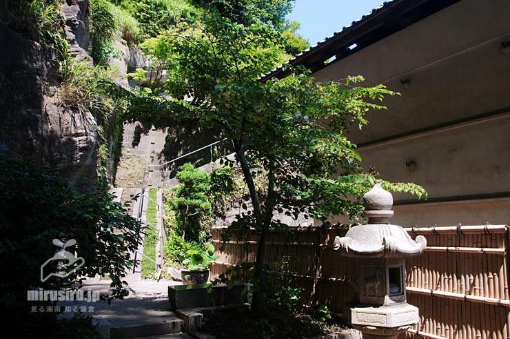 シナノキの若木 鎌倉市・円覚寺龍隠庵 2019/06/13