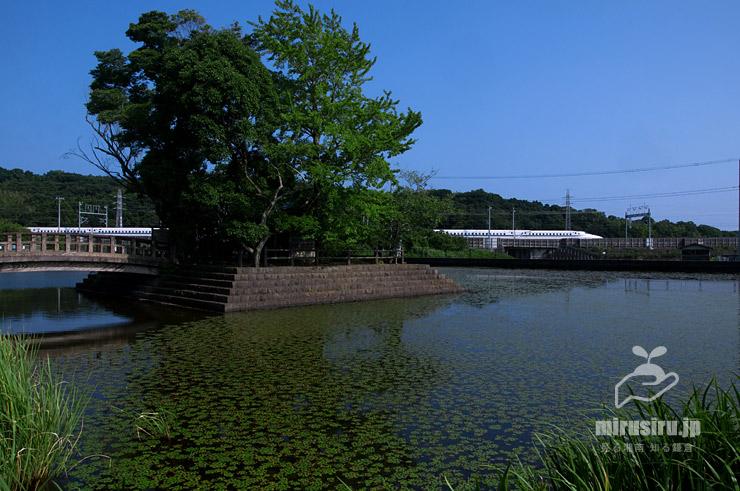 群生したヒシ 大磯町・東の池 2019/08/03