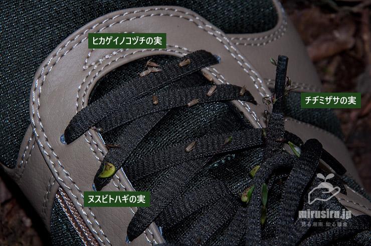 スニーカーにひっつき虫 秦野市・葛葉緑地 2019/11/10