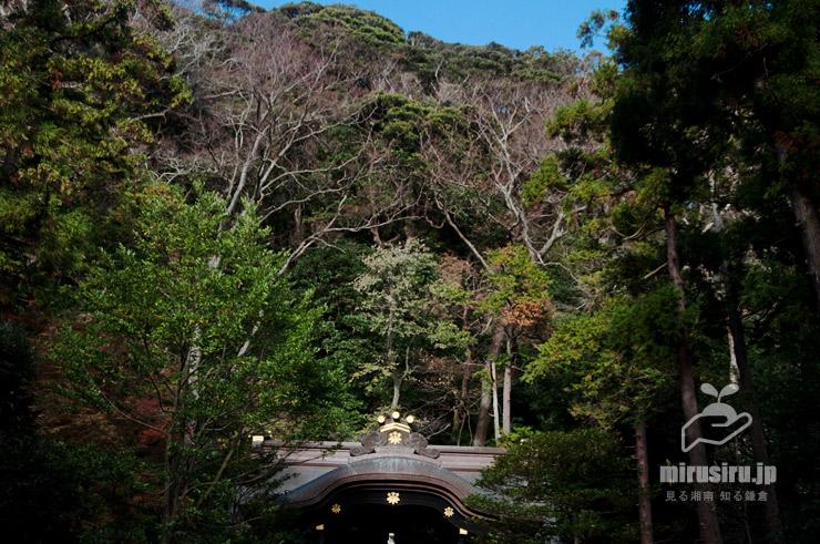 鎌倉市・鶴岡八幡宮白旗神社 2019/12/05