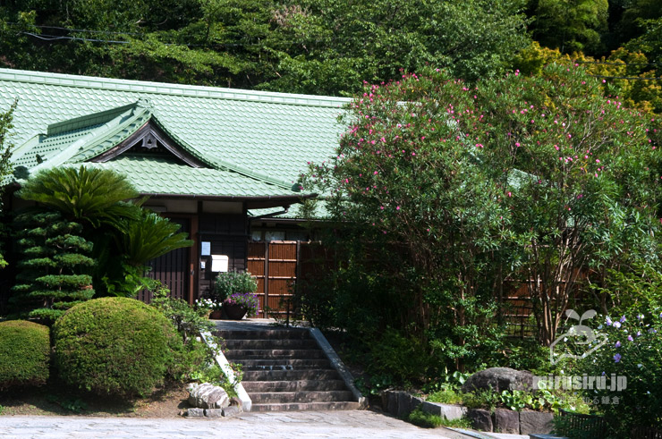 キョウチクトウ 鎌倉市・龍宝寺 2020/08/06