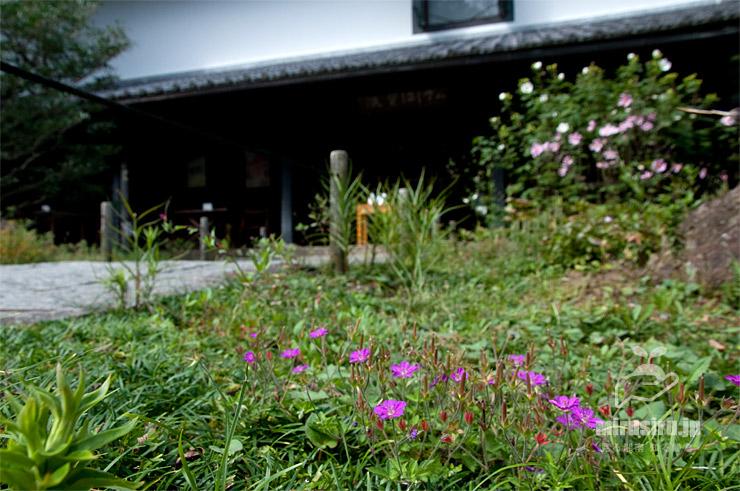 ベニバナゲンノショウコ 鎌倉市・東慶寺 2020/10/06