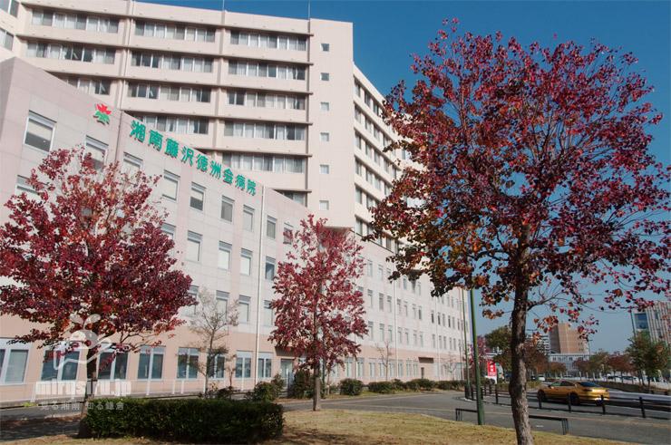 ナンキンハゼの紅葉 藤沢市・湘南C-X 2020/11/26