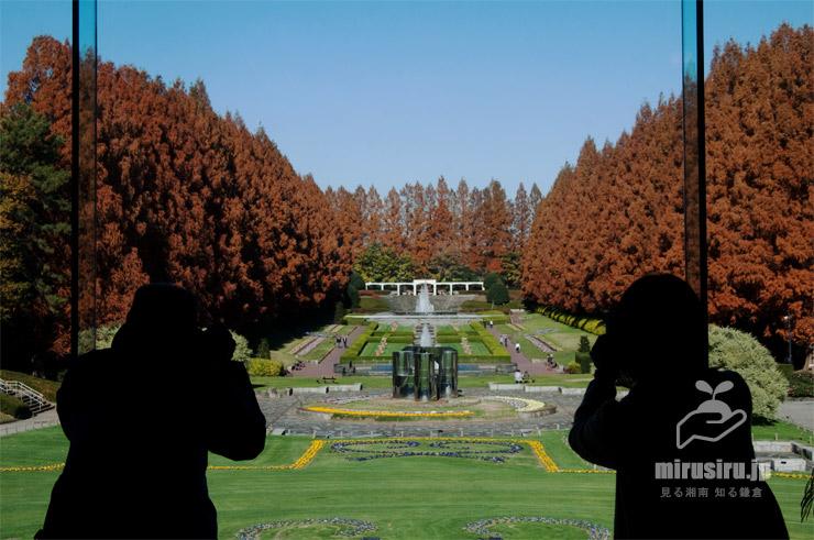グリーンハウス2F展望室から見た噴水広場メタセコイア並木の紅葉 相模原市南区・相模原公園 2020/12/08