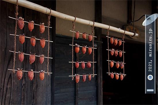 干し柿吊るし中 横浜市戸塚区・舞岡公園小谷戸の里