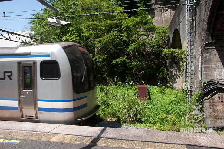 線路沿いに生えたハナウド JR横須賀線「田浦」駅・(東)七釜トンネル側 2021/04/20