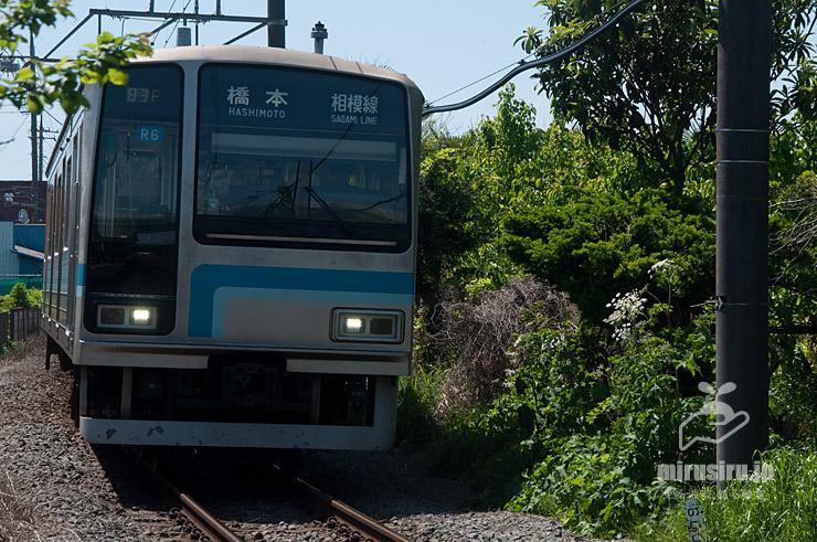 線路際に生えたハナウド 寒川町・JR相模線「宮山」駅 2021/04/22