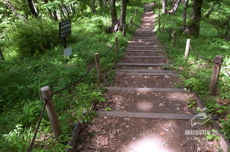 ワニグチソウの生える草地 横浜市緑区・四季の森公園 2021/05/04