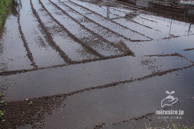 水が引き入れられ始めた田んぼ 茅ヶ崎市浜之郷 2021/05/26