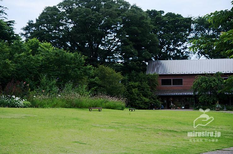 ガウラの大群生 横浜市戸塚区・俣野別邸庭園 2021/06/22