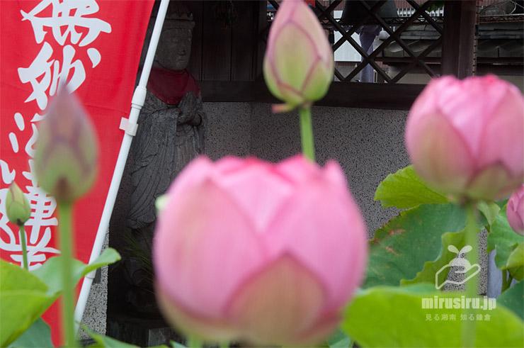 ハス 平塚市・要法寺 2021/06/28