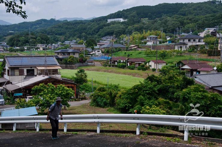 ソバ畑 大井町山田 2021/05/29
