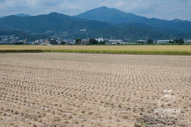 稲刈り後の田んぼ 平塚市真田 2021/09/24